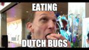 eatig dutch bugs